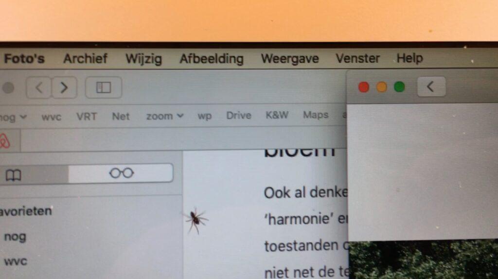 Spinnetje op laptopscherm
