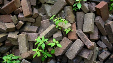 nature-grass-rock-wood-lawn-flower-585955-pxhere-compressed